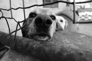 17 dogs rescued from abuser