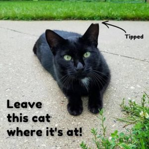 Leave this cat where it's at!