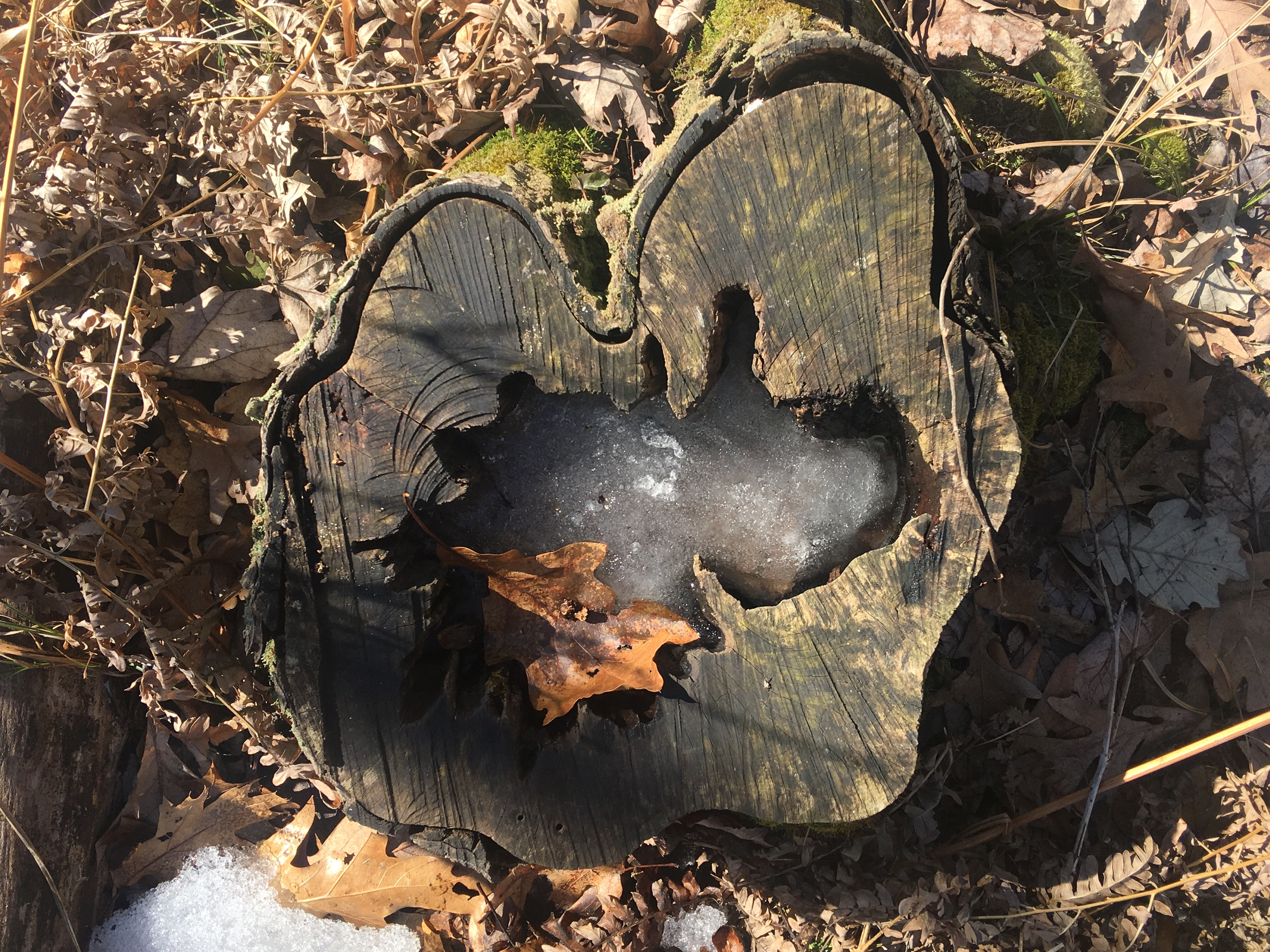 Albion's Trails – The Whitehouse Nature Center