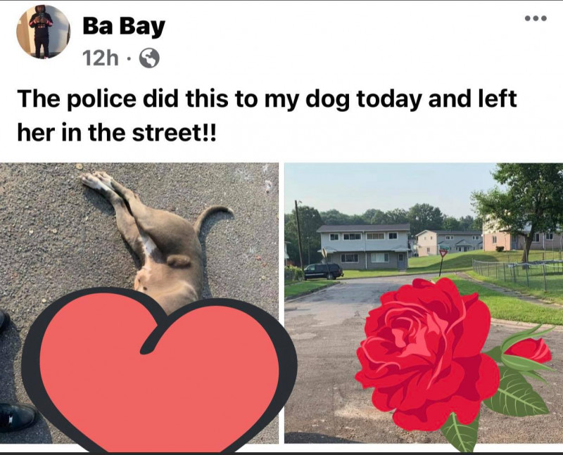 Albion, Michigan, is a dog town; how could an Albion Department of Public Safety officer shoot someone's family pet?